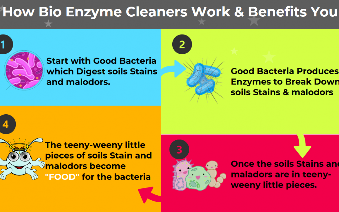 How Bio Enzyme Cleaners Work & Benefits You