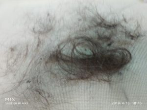 hair removed from carpet